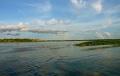 Розовые дельфины обитают в Амазонке