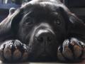 Как биополе собак и кошек влияет на человека
