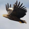 Волшебные моменты из жизни птиц