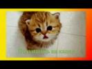 Смешное видео о животных Прикольное видео для детей Создай себе хорошее настроение