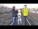 СМЕШНЫЕ ЖИВОТНЫЕ 2018 ЛУЧШИЕ ПРИКОЛЫ С ЖИВОТНЫМИ Про Собак И Двух Баранов