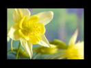 С праздником весны, друзья! С 1 марта! .mp4