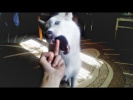Смешные Собаки 2018 Смешные Приколы с Животными Приколы с Собаками Funny Dogs Compilation 2018