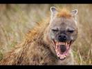 Спецвыпуск !!! Сила хищников ! Документальные Фильмы с National Geographic