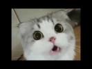 Подборка лучшие приколы с животными январь 2018 | A compilation of funny animals January 2018
