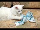 Деньги и Животные Смотреть видео Приколы с животными 2018 Когда Кот бухгалтер а Собака фин директор