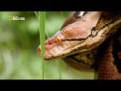 Гиганты мира животных 2 (Самая большая змея)