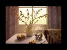 Мой фильм Осенние натюрморты