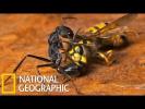 Спецвыпуск !!! Войны насекомых ! Документальные Фильмы с  National Geographic