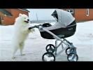 ПРИКОЛЫ 2018 Март Лучшие приколы с Животными Животные и воздушные шарики Смешные Собаки и Кошки