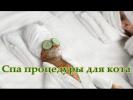 Спа процедуры для кота Григория