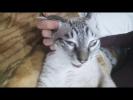 Приколы Коты Приколы Кошки Приколы Собаки Видео Приколы с животными 2018 Смешные СОНИ