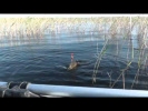 Классная рыбалка и ловля крупного карася на поплавочную удочку В СЕКРЕТНОМ МЕСТЕ