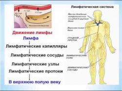 И Федощук Лимфосистема 11 06 15