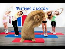 Фитнес с котом. Красивая девушка занимается фитнесом со своим котиком.