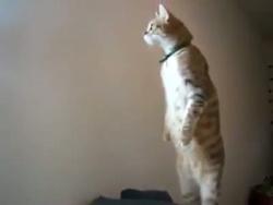 Прикольный котик.