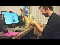 Приколы с животными 2018 Смешные собаки и кошки Топовая подборка под Новый Год 面白い犬 lustige Tiere