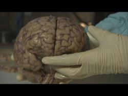 Тайны человеческого мозга - futuris