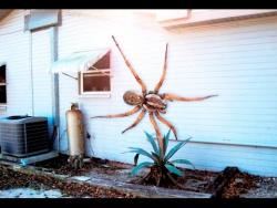 10 самых опастных пауков в мире