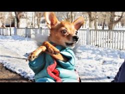 Собаки бывают разные милые и опасные Приколы про собак 2018