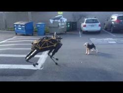 Пушистик против железяки: робот-собака vs настоящий пес