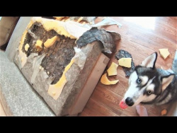 СОБАКИ не Виноваты просто НАКОСЯЧИЛИ или ТОП ПРОВИНИВШИХСЯ СОБАК Смешные Собаки 2018