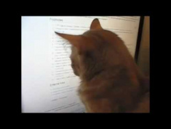 У кота интернет зависимость / Internet addiction the cat