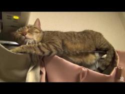 Самая смешная подборка спящих котиков 2016