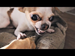 ПОПРОБУЙ НЕ ЗАСМЕЯТЬСЯ -  Смешные приколы и фейлы с животными 2018 ( Самые жадные собаки в мире )