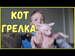 Приколы про животных Самые смешные видео с животными за неделю коты кошки собаки новый выпуск июнь