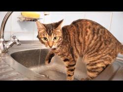 ПРИКОЛЫ С КОТАМИ И КОШКАМИ 2018 СМЕШНЫЕ КОТЫ И КОШКИ 2018 Котики Кошки  и ВОДА