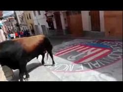 Разъяренный бык на деревенском празднике врывается в квартиру! Валенсия. Испания.