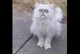 Кот пришёл в гости и напугал обитателя дома