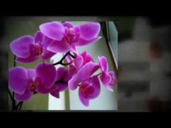 Самые полезные комнатные растения для детской комнаты
