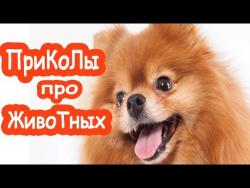 Приколы про животных приколы для мужиков Собака от тоски спасака pets life приколы для всех приколы