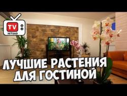 Домашнее цветоводство 🌸 Лучшие растения для гостиной 🌸 Выбираем  комнатные растения с Хитсад