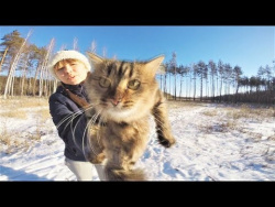 ПРИКОЛЫ С ЖИВОТНЫМИ 2018 Funny And Cute Animals Videos Compilation