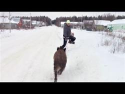 Самые смешные видео про животных Приколы с животными 2018 СОБАКИ И ПОРОСЯТА Смешные животные 2018