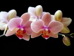 ТОП-10 САМЫХ КРАСИВЫХ комнатных растений