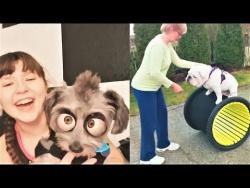 Приколы с Животными 2018 Смешные Собаки и Другие Животные  LOL Pets #2