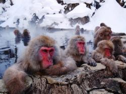 Дикая Природа Японии . Снежные Обезьяны и Вулканы