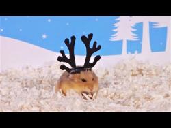 ТОП 5 Лучшие ВИДЕО ПРО СМЕШНЫХ ХОМЯКОВ  Top 5 funny video about a hamster  ХОМКИ