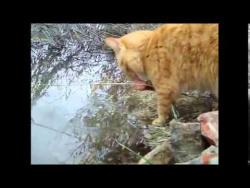 Первая весна кота Лаврентия