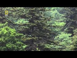 Дикая природа России  5 из 6  Таежный край