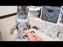 Коты приколы Собаки приколы Животные приколы 2018  Толстый Кот и Собака руками поедака