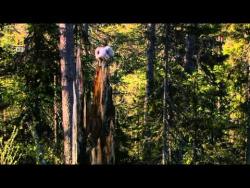 Дикая природа России  6 из 6  Первозданные долины