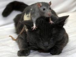 Кошки-мышки/Cat-and-mouse