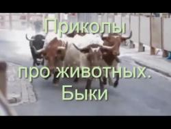 18+  Быки!  Приколы  животных. Быки оторвались по полной. Месть  быков страшна!