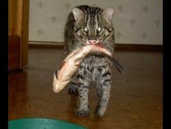 Приколы с котами - КОТЫ НА РЫБАЛКЕ. Лучшая подборка котов рыболовов.