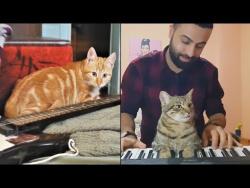 ПОЮЩИЕ КОШКИ И СОБАКИ Приколы с животными 2018 Подборка Животные и Музыка Cute Misic Pets